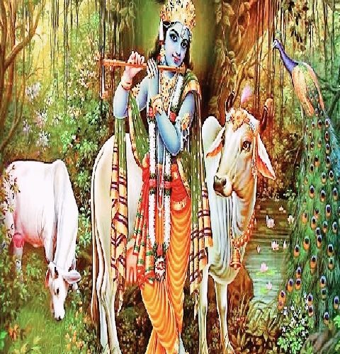 Why is Sacred Cow so significant in Hinduism